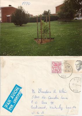 Belgian tree