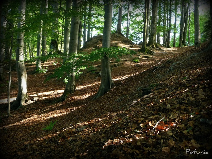 Sherwood skogen