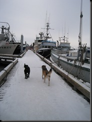 dogs on docks