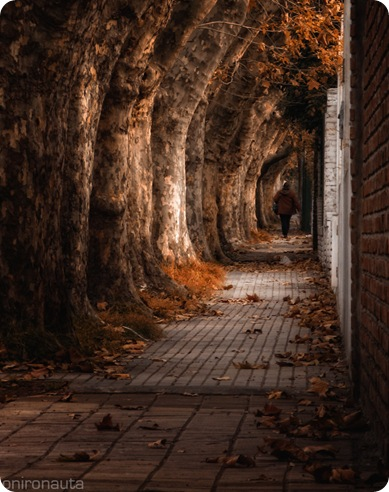 autumn alley