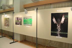Japan Bird Festival 2010フォトギャラリー