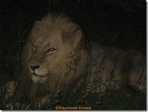 KING OF JUNGLE 022