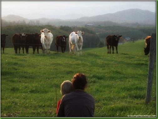 callin the cows3