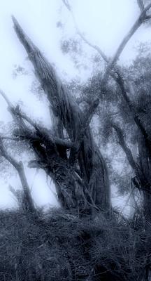 fl_2010_001 - tree_funeral.jpg