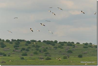 Birds near Jordan River north of Sea of Galilee, tb032807101