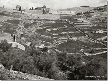 Ophel, site of City of David, mat05424