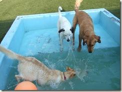 spud pool