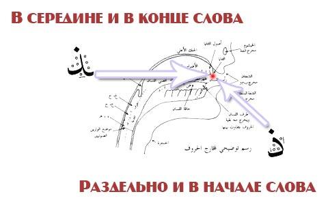 Арабский алфавит, произнесение звука (Заль), Кончик языка обязательно должен прикасаться к передним верхним зубам...