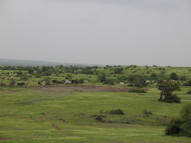 kutch_landscape1.jpg