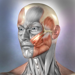 Download Muscle and Bone Anatomy 3D APK