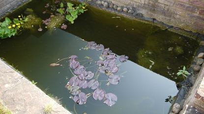 Yukky Pond