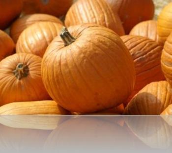 1089296_pumpkins