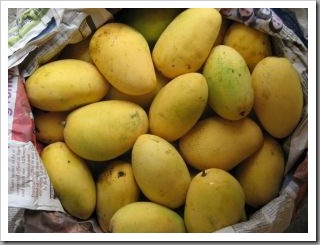 buah mangga