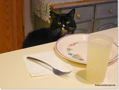the cat who came to dinner