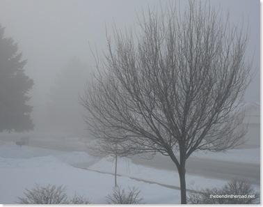 Grey foggy January morning