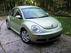 green bettle