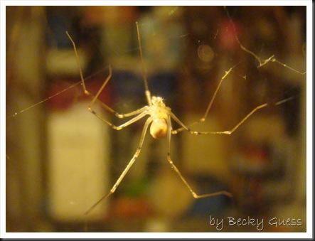 08-12-10 spider 2