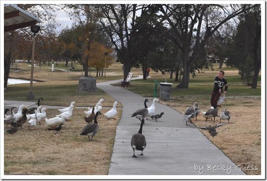 11-24-10 Feeding geese 03