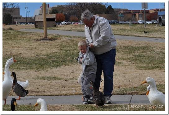 11-24-10 Feeding geese 09