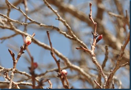 03-13-11 blooming 14