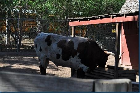 04-28-11 Zoo 033