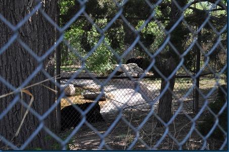 04-28-11 Zoo 069