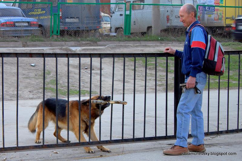 Смешная фотография собака