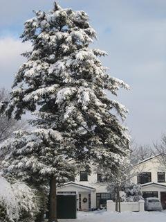 Snow 47
