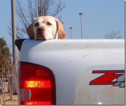 truckdog