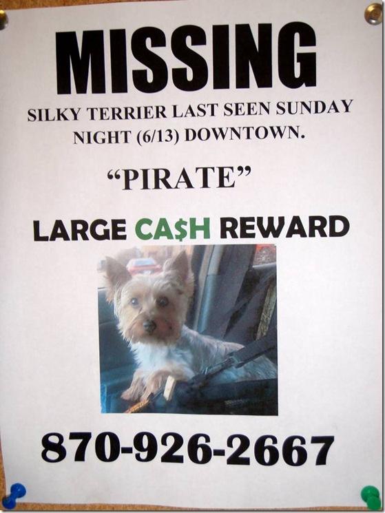 lost terrier