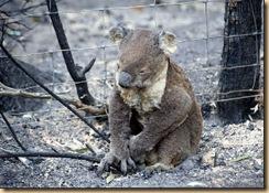 VicBushfires2009