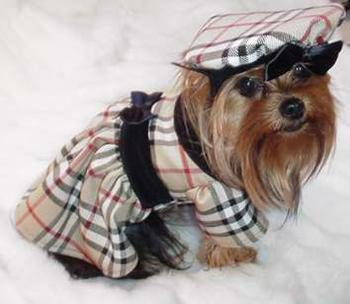 Burberry Dog