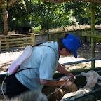 Schafe entwurmen
