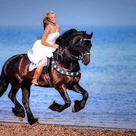 Friesian Stallion Olof by Shakenimages Ken - Animals Horses