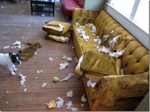 Alguns cães não podem ficar sozinhos em casa
