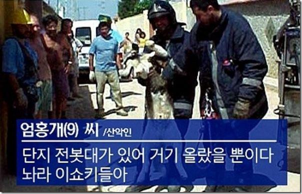 O resgate de um cão (5)