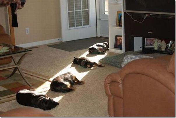 Cães tomando banho de sol