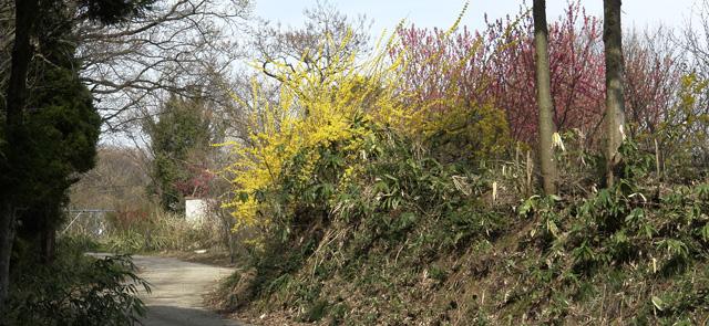 金沢 桜満開 その6 桜の秘境#2
