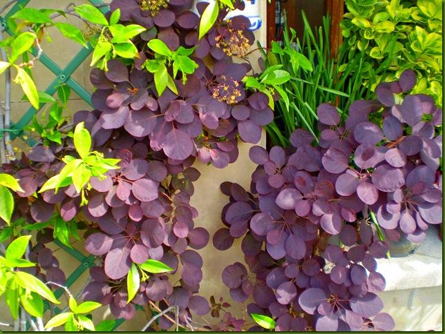 flores de abril 2010005