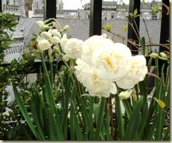 Primavera 2006 014