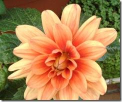 flores 062
