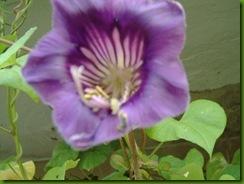 flores 2004