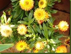 flores verano 2005 013
