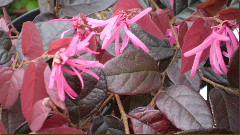 marzo 2011 y botanico 008