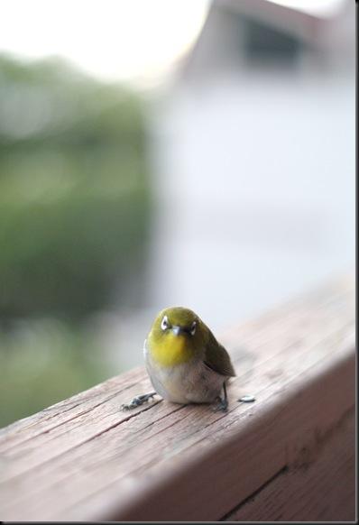 bird (24)