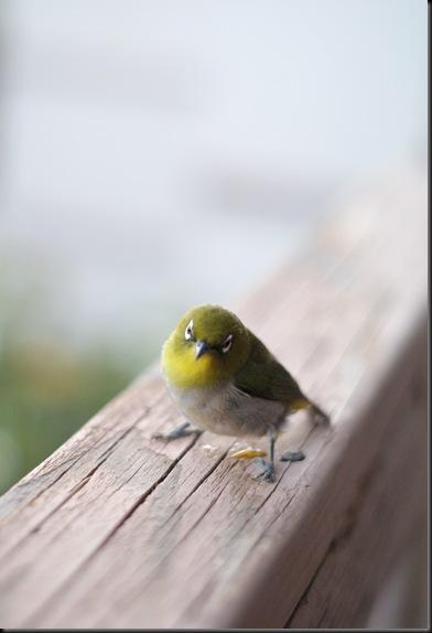 bird (25)