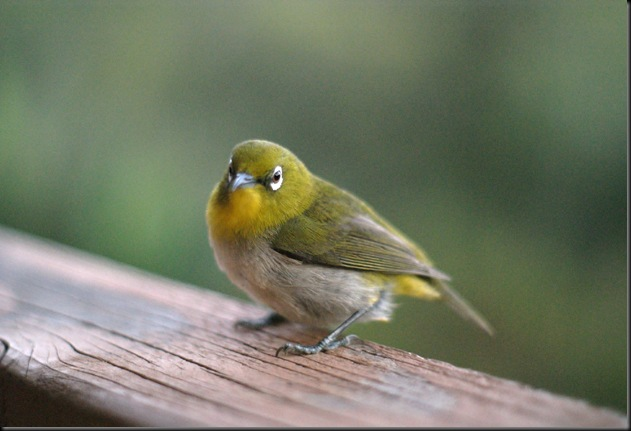 bird (37)