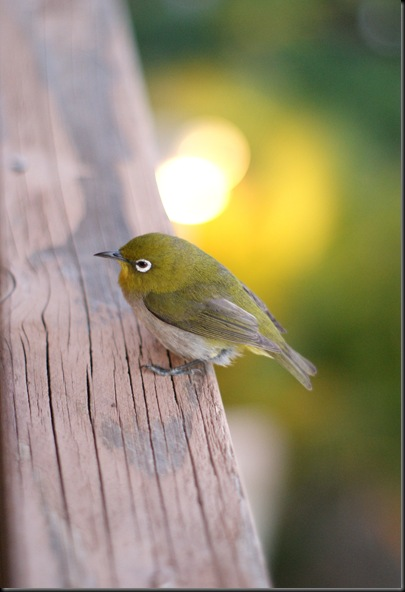 bird (43)
