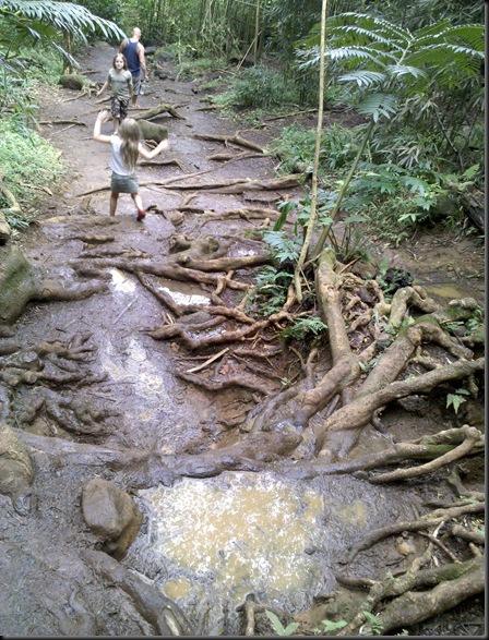 Manoa Falls (35)