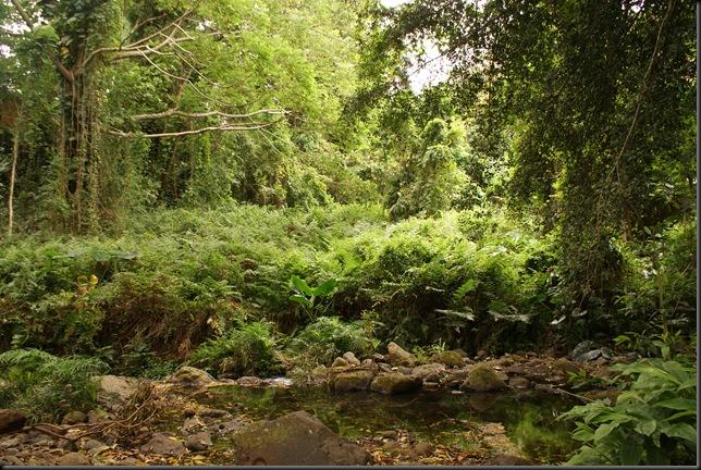 Maunawili hike 125